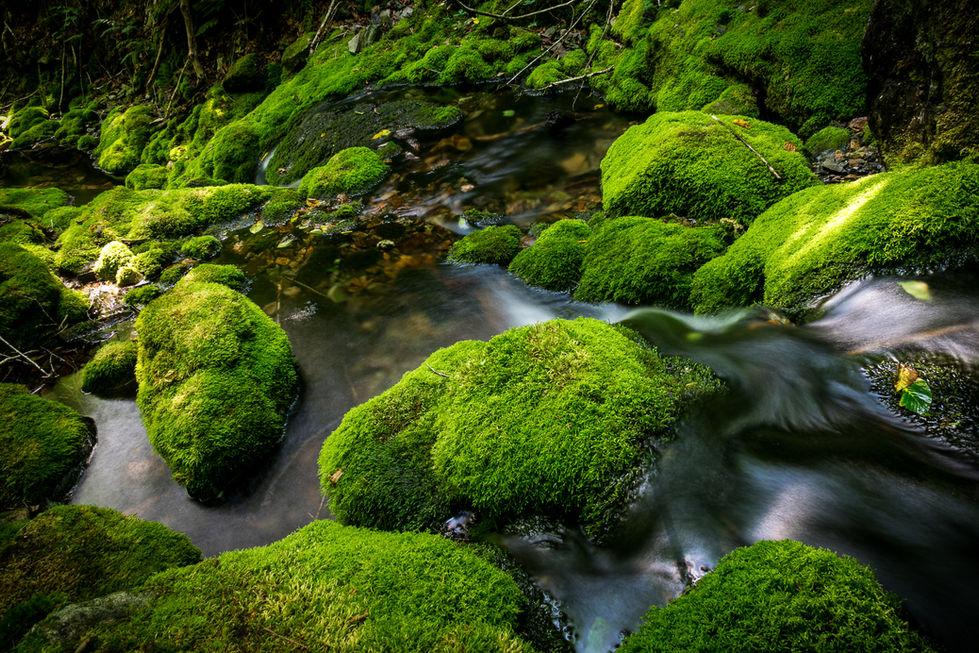 Greenery Goodness