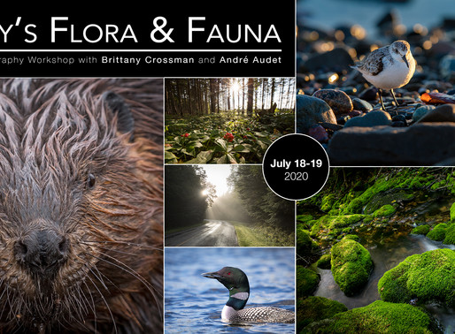 Workshop Announcement: Fundy's Flora & Fauna