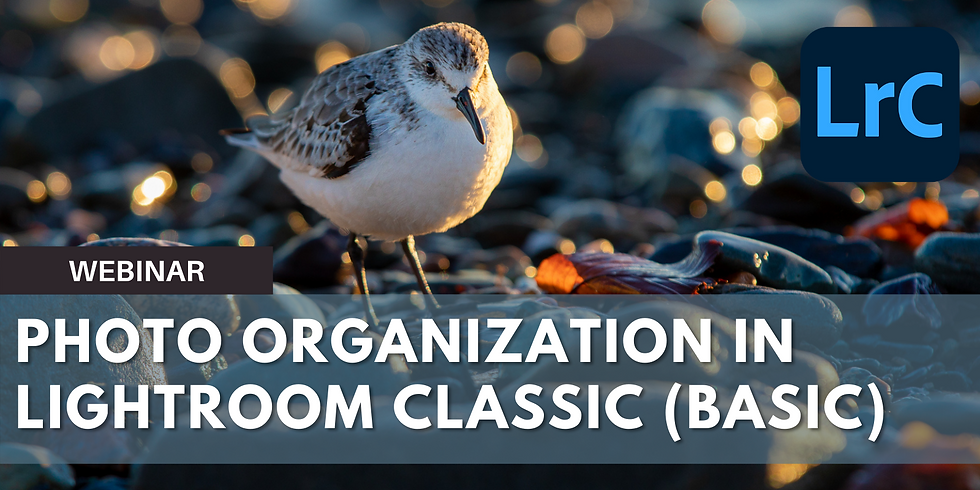 Basic Photo Organization in Lightroom Classic