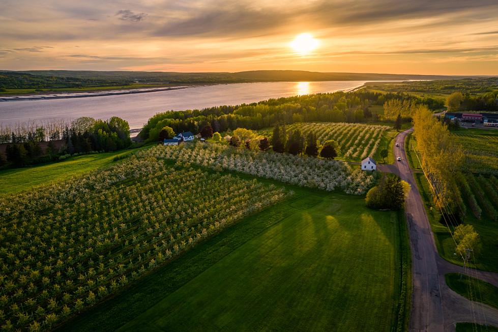 Sunset at Belliveau Orchard