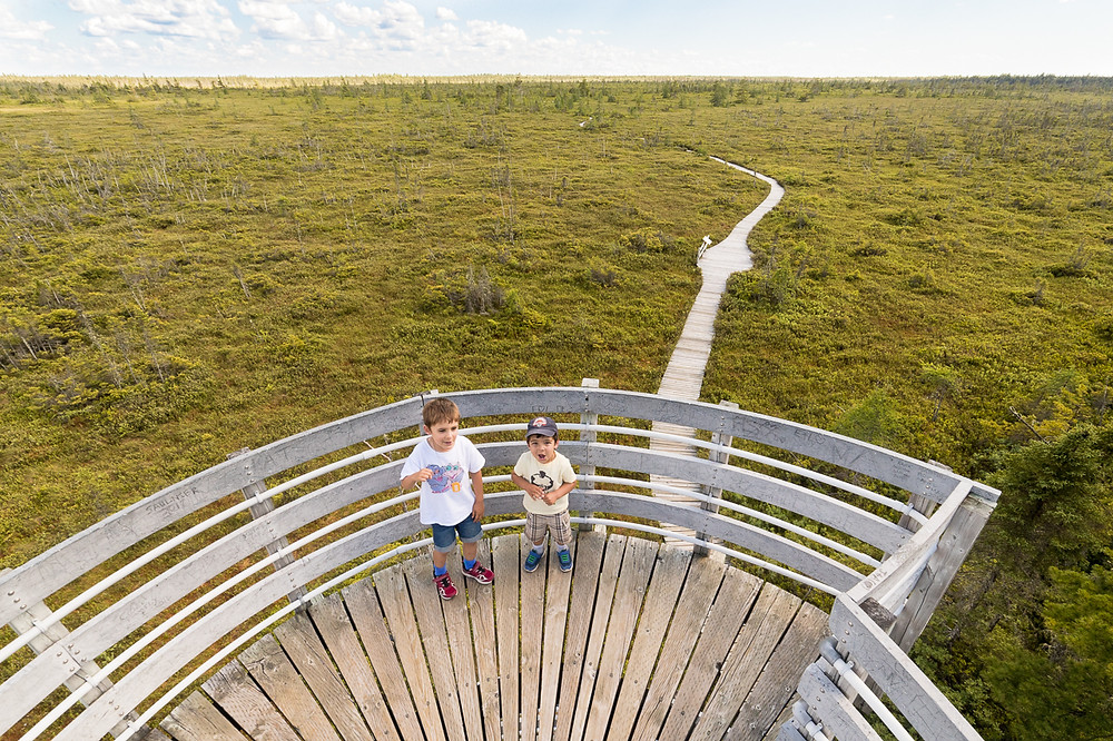 Two young boys on top of an observation tower in a bog in a national park