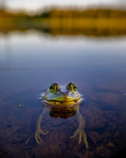 This Frog Needs a Hug!