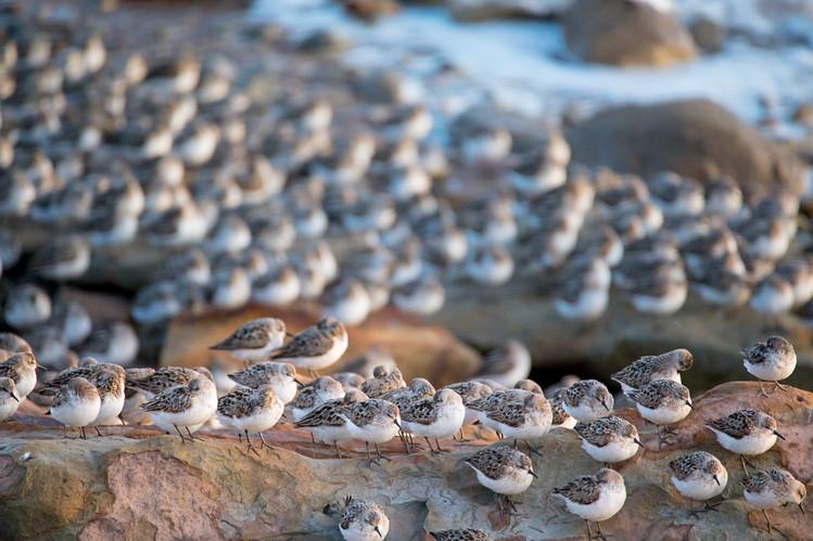 Thousands of birds