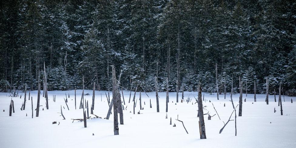 Wintery bog