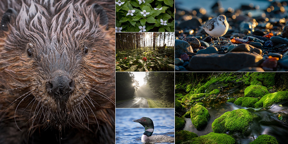 Fundy's Flora and Fauna