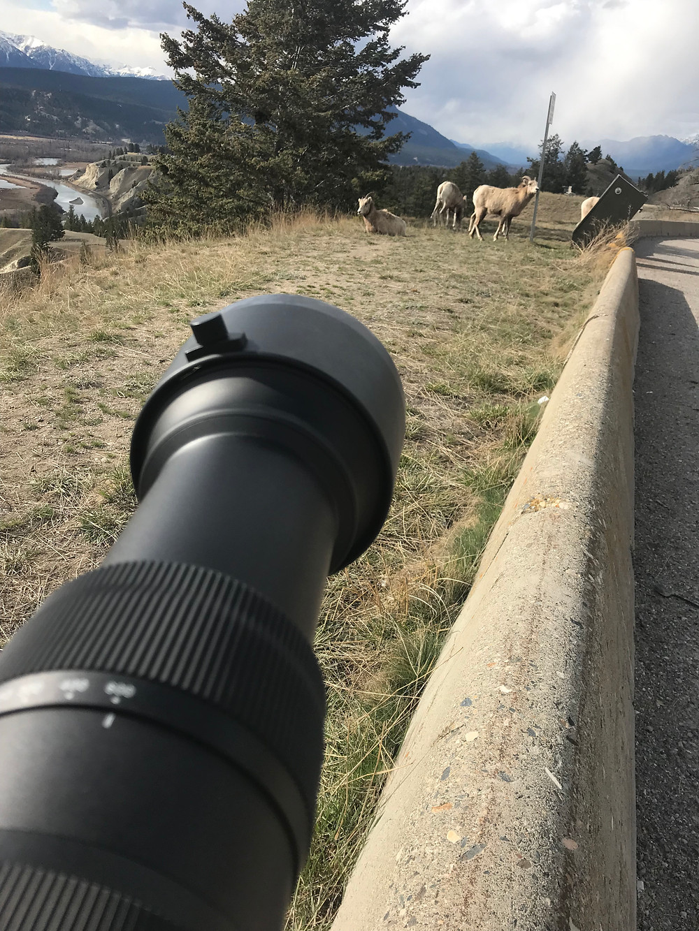 Sigma 60-600 in wildlife photography action