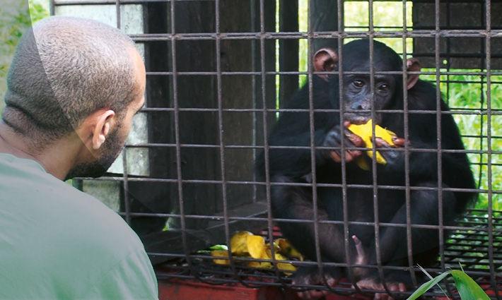 Schutz der Schimpansen