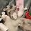 Thumbnail: Toy Mouse
