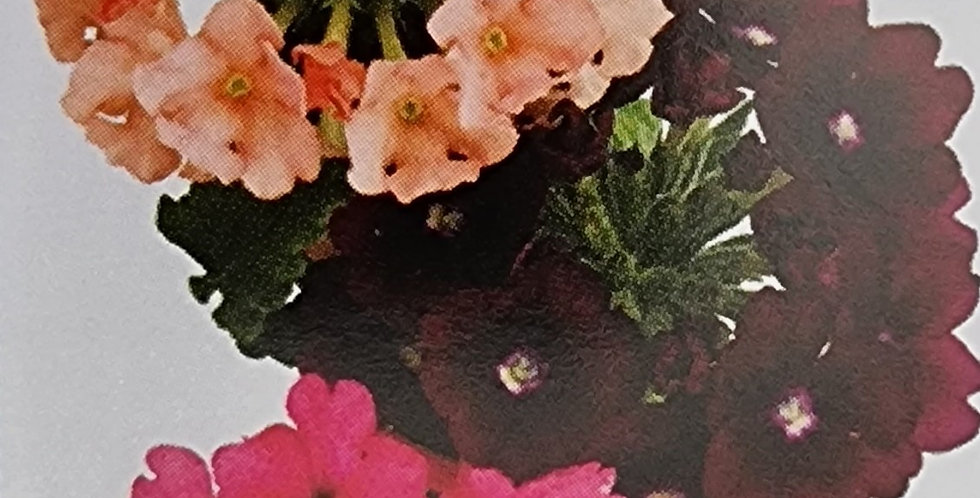 VERVEINE Primavera Pop Tris