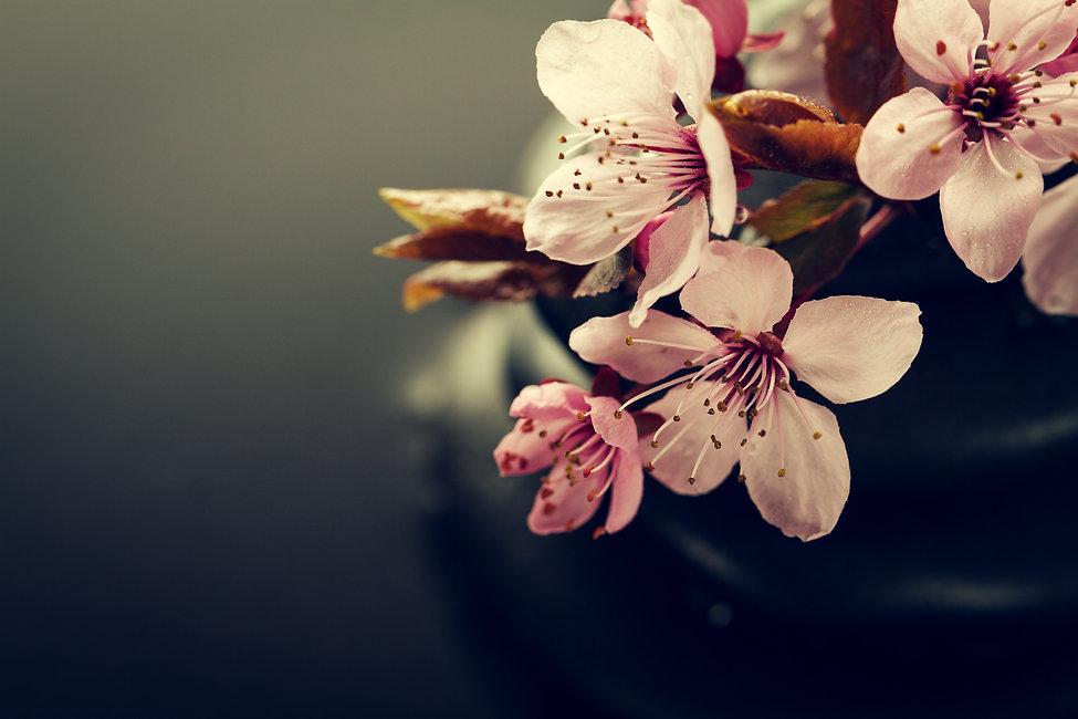 beautiful-pink-spa-flowers-spa-hot-stone