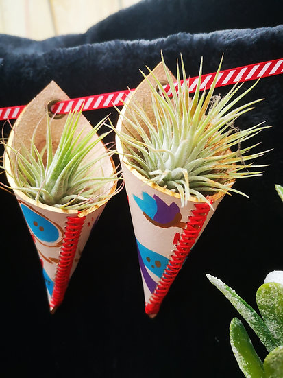 Hand-painted Air plant holder - with plant