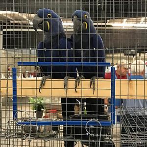 Fall 2018 Bird Fair Photos