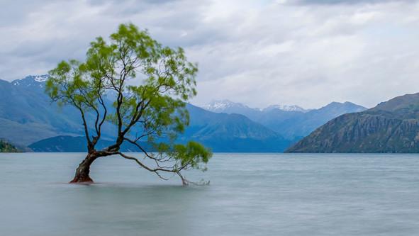 Nuova Zelanda, i pendolari viaggiano in catamarano... elettrico