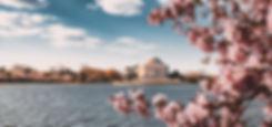 blossoms-home2.jpg