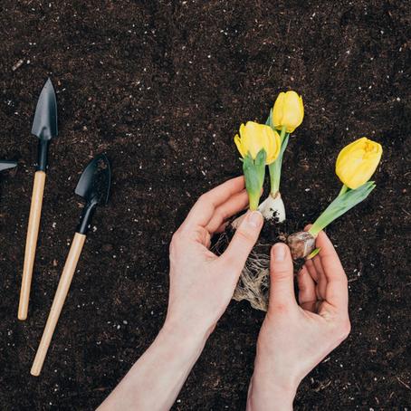 Die 10 besten Tipps und Tricks für einen pflegeleichten Garten