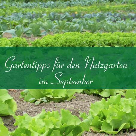 Gartentipps für den Nutzgarten im September