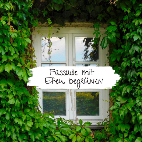 Fassade mit Efeu begrünen