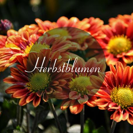 Tipps für den herbstlichen Blumengarten
