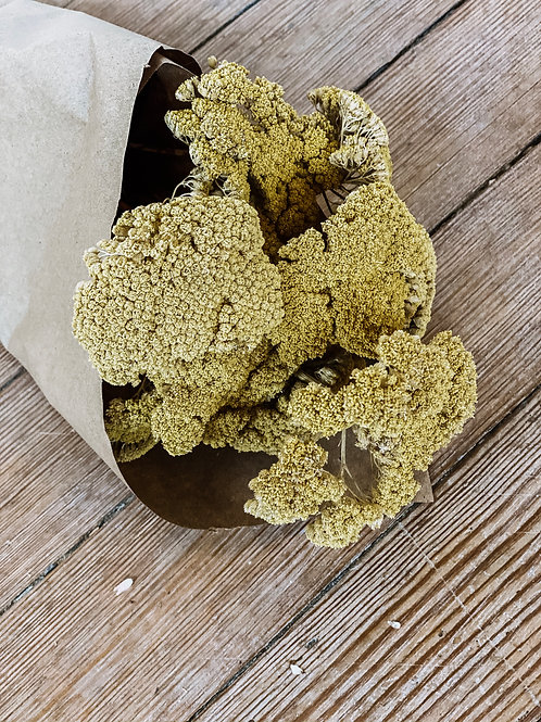 Dried Natural Yarrow
