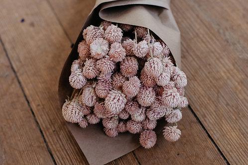 Dried Globe Amaranth