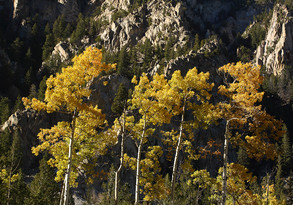 Cottonwood Pass by D Birkey_1000.jpg