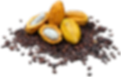 cacao pod w beans png.png