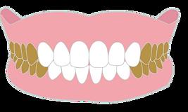 前歯以外-01.png