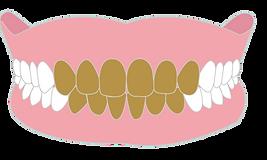 前歯-01.png