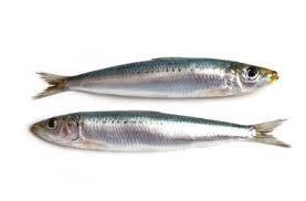 Sardines x 4