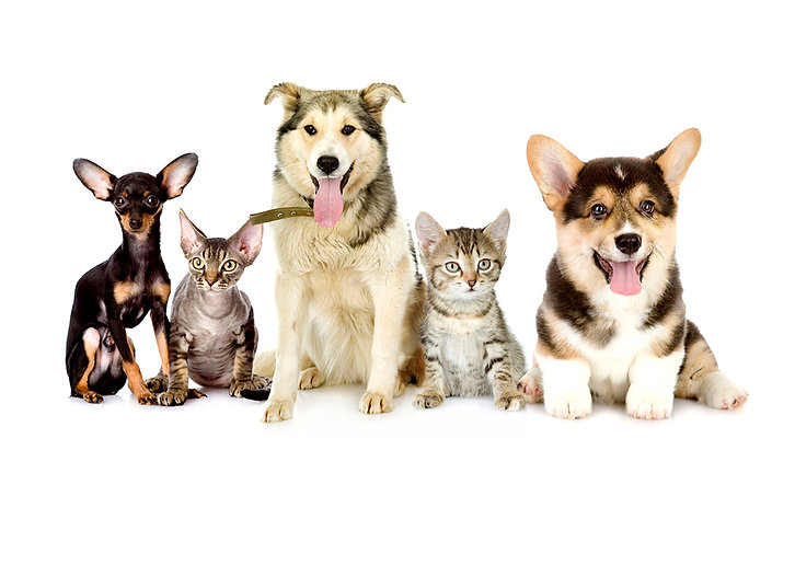 dogs-cats  new.jpg