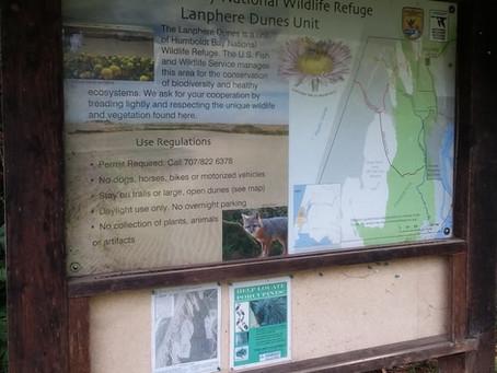 Lanphere Dunes
