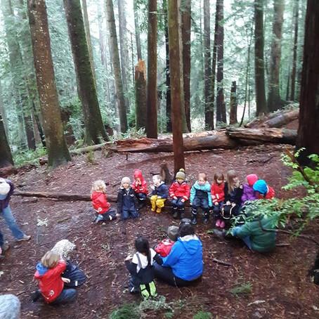 Redwood Community Park