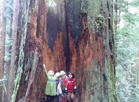 Meeting Common Core in the Forest.