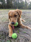 Young Bella playing fetch