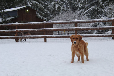 Bella in wintertime in Washington