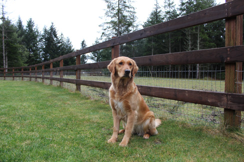 Bella on the farm