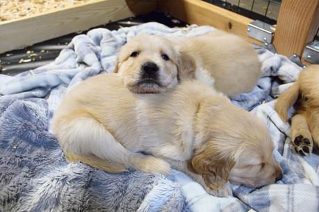 Siblings cuddling