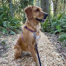 Bella Rose on a walk