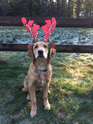 Bella as a reindeer for our Christmas card