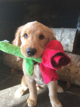 """""""Will you accept this rose?"""""""