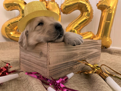 Blue Puppy on New Years Eve!