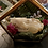 Thumbnail: Possum skull terrarium
