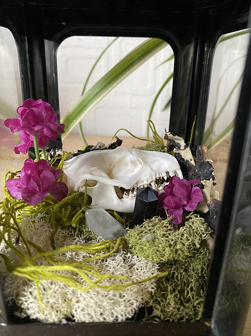 Hedgehog Skull Lantern