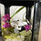 Thumbnail: Hedgehog Skull Lantern