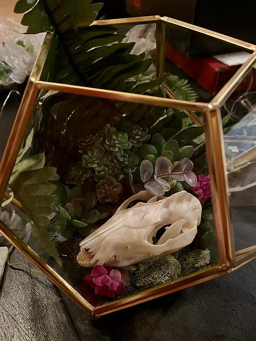 Possum skull terrarium