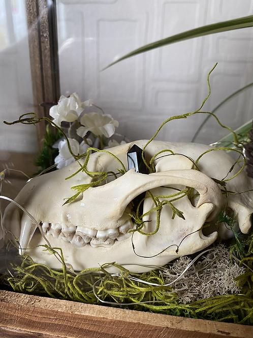 Raccoon Skull lantern