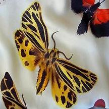 ALEXANDER-McQUEEN-2006-Butterfly-02-1_convert_SS.jpg