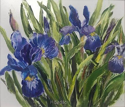 Blue Flag Iris, by Helena Bosse