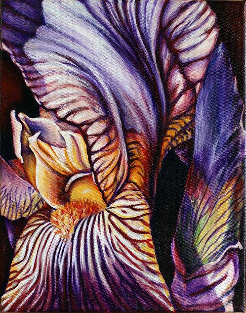 Wild Iris I by Shelley Weber