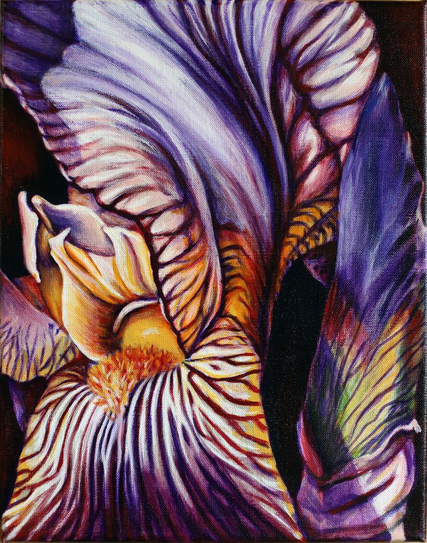Wild Iris I
